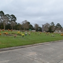 Consolata Cemetery photo album thumbnail 43